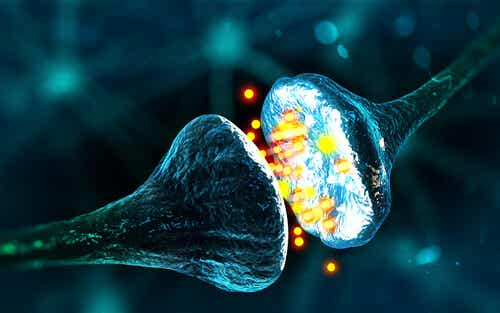 GABA, el neurotransmisor de la calma y la relajación
