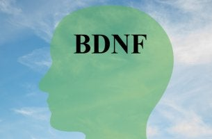 Cabeza con palabra BDNF