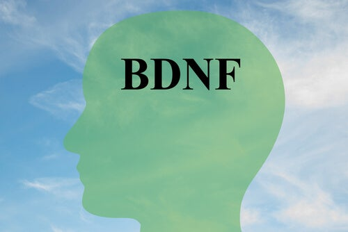 Cómo aumentar el BDNF, proteína clave para las células cerebrales sanas