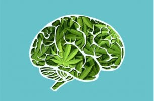 Cerebro con cannabis en el interior