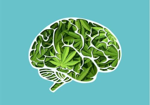 Los efectos del cannabis en el cerebro a largo plazo