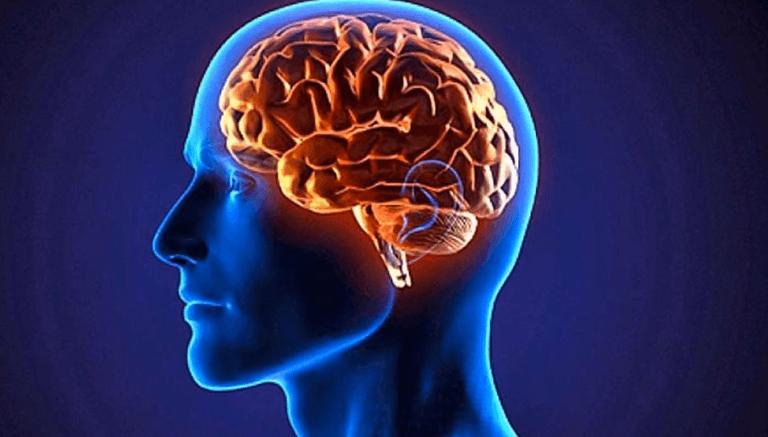 cerebro representando la importancia del Glutamato