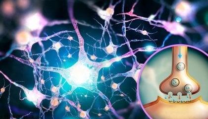 Glutamato, un neurotransmisor con múltiples (y desconocidas) funciones