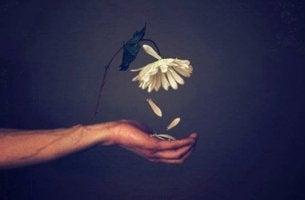 mano con flor simbolizando el efecto del desprecio