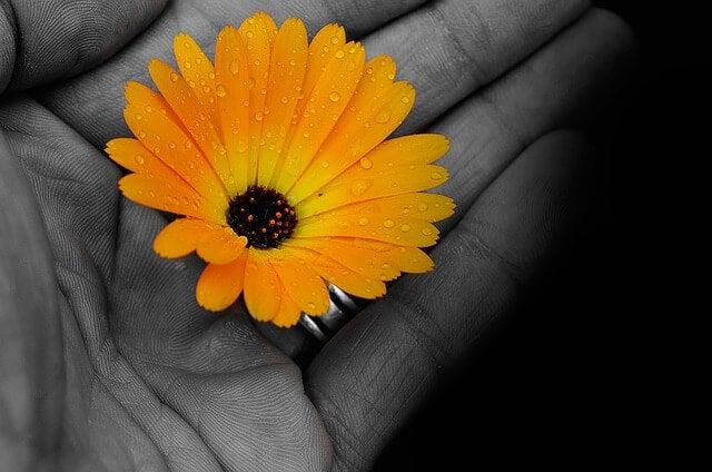 Mano con flor amarilla