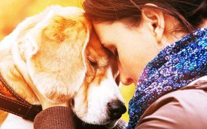 Los motivos que nos llevan a querer a un animal con tanta intensidad