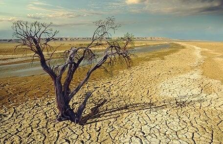 imagen con sequía