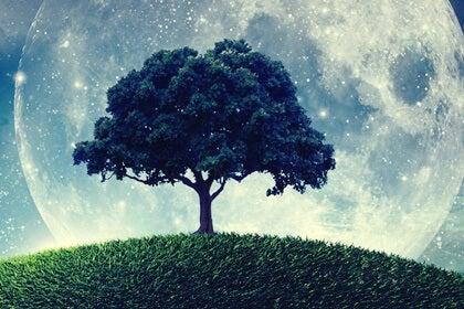 La parábola del árbol que no sabía quién era