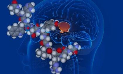 Vasopresina en el cerebro, corticosteroides