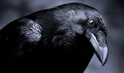 La inteligencia en el mundo animal: los cuervos