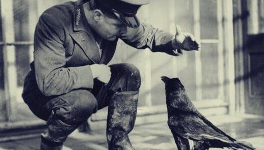 cuervo con soldado simbolizando la inteligencia en el mundo animal
