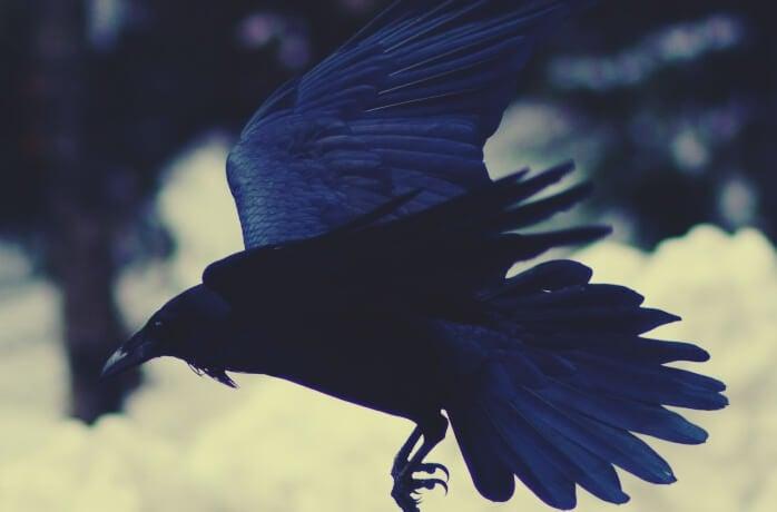 cuervo simbolizando el mito de los esquimales