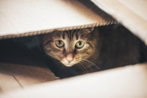 Gato en el interior de una caja