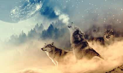 Qué es la medicina de lobo, según los nativos americanos