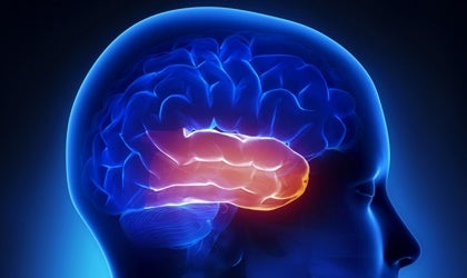 Lóbulo temporal: el área de la afectividad y la memoria