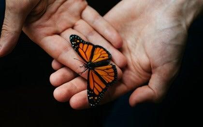 manos con mariposa simbolizando el acompañamiento terapéutico