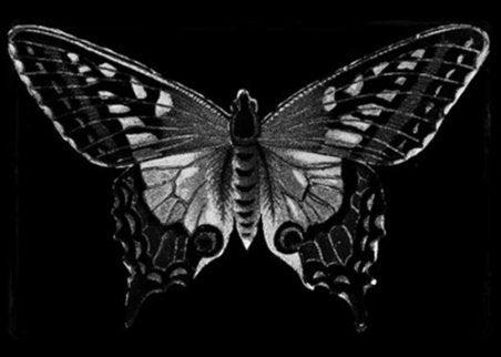 mariposa simbolizando la maldad humana