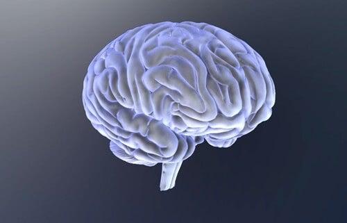 cerebro de los niños con trastorno del espectro autista