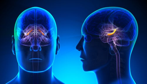 Cerebro de un hombre con el hipocampo iluminado