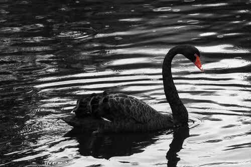 El cisne, la medusa y el elefante negros: tres metáforas de lo inesperado