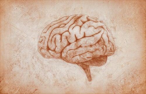 La corteza motora: características y funciones