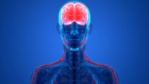 Psiquiatría biológica: ¿en qué consiste?