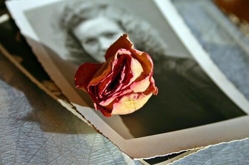 foto con rosa para trabajar la terapia de reminiscencia