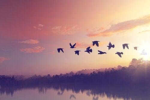 Grupo de pájaros volando