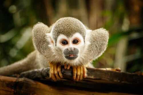 Etología: la ciencia del comportamiento animal