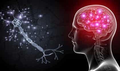 Células OLM: las neuronas que nos ayudarán a tratar la ansiedad severa