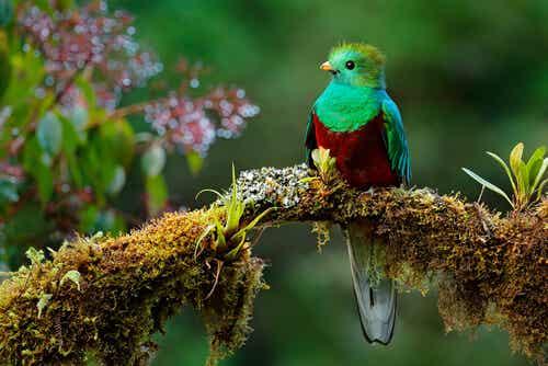 La bella leyenda del pájaro Toh