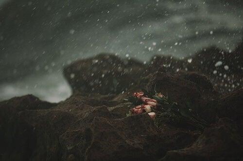rosa en acantilado simbolizando la soledad emocional