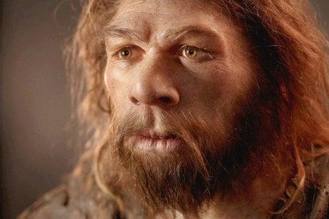 El cerebro de los neandertales