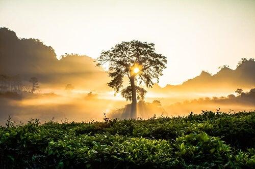 árbol al amanecer simbolizando la la teoría de la autorrealización