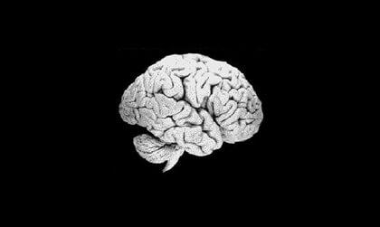cerebro de un racista