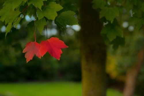 dos hojas rojas simbolizando la comorbilidad de la depresión