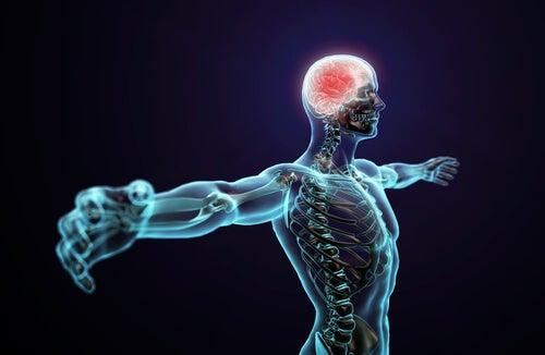 Hombre con el sistema nervioso iluminado