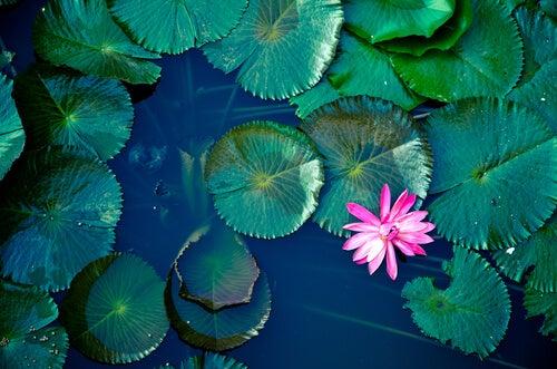 El estanque, una antigua leyenda zen