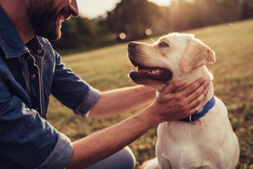Historias de perros que han hecho historia