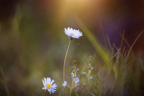 """flor simbolizando el texto """"Se llama calma"""", del Dalai Lama"""