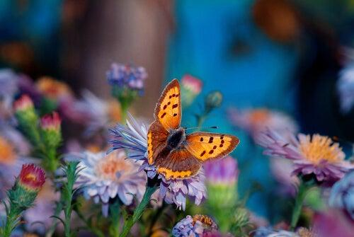 La flor más bella del jardín, una historia japonesa