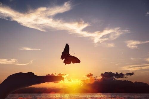 Mariposa volando al atardecer