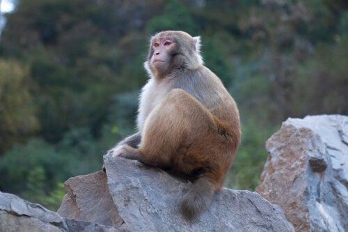 Mono sentado