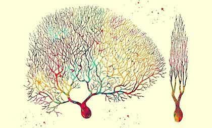 Neuronas de Purkinje, las enigmáticas células del cerebelo y el corazón