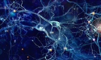 Neuronas von Economo: funciones y características
