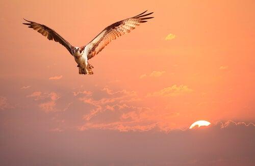 El ave que no sabía quién era, una historia sobre la identidad