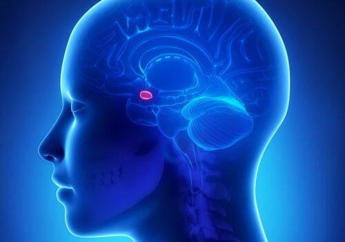 La amígdala cerebral y su relación con la ansiedad
