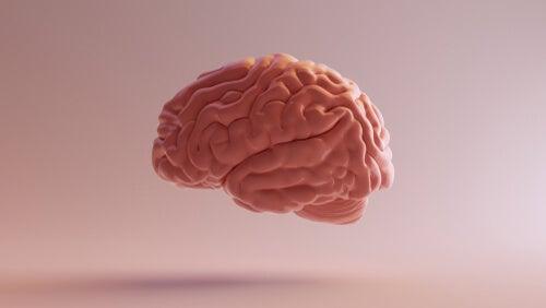 Cerebro con visión lateral
