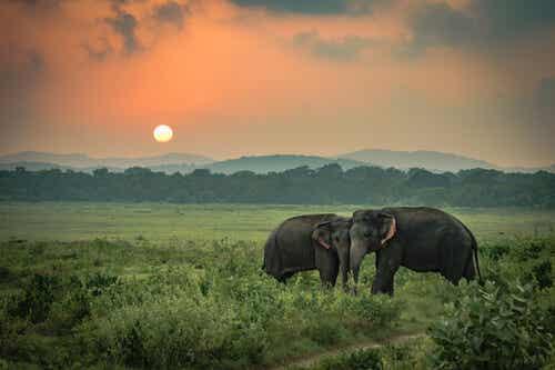 La tristeza de los elefantes, una historia real