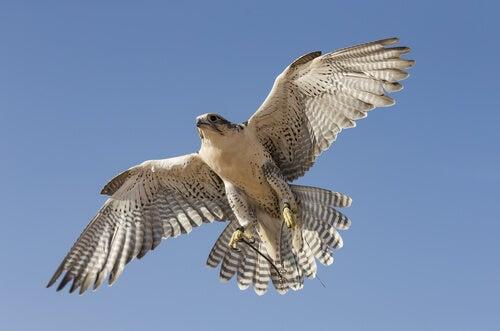 El halcón que no podía volar, una historia zen sobre la autonomía